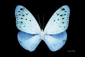 Miss Butterfly Euploea - X-Ray Black Edition by Philippe Hugonnard
