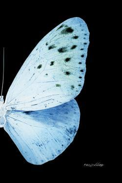 Miss Butterfly Euploea - X-Ray Right Black Edition by Philippe Hugonnard
