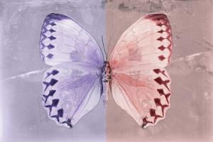 Miss Butterfly Formosana - Mauve & Red by Philippe Hugonnard