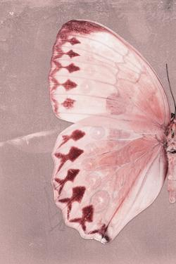 Miss Butterfly Formosana Profil - Red by Philippe Hugonnard