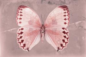 Miss Butterfly Formosana - Red by Philippe Hugonnard