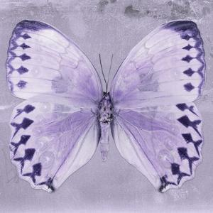 Miss Butterfly Formosana Sq - Mauve by Philippe Hugonnard