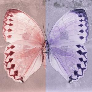 Miss Butterfly Formosana Sq - Red & Mauve by Philippe Hugonnard