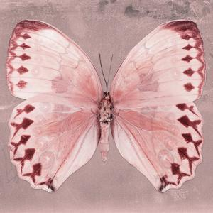 Miss Butterfly Formosana Sq - Red by Philippe Hugonnard