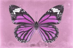 Miss Butterfly Genutia - Pink by Philippe Hugonnard