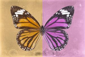 Miss Butterfly Genutia Profil - Honey & Pink by Philippe Hugonnard