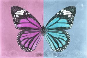 Miss Butterfly Genutia Profil - Pink & Blue by Philippe Hugonnard