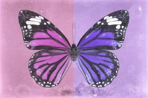 Miss Butterfly Genutia Profil - Pink & Purple by Philippe Hugonnard