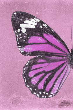 Miss Butterfly Genutia Profil - Pink by Philippe Hugonnard