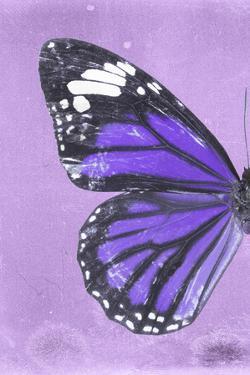 Miss Butterfly Genutia Profil - Purple by Philippe Hugonnard