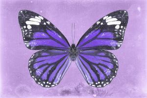 Miss Butterfly Genutia - Purple by Philippe Hugonnard