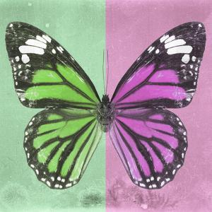 Miss Butterfly Genutia Sq - Green & Pink by Philippe Hugonnard