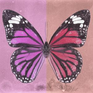 Miss Butterfly Genutia Sq - Pink & Hot Pink by Philippe Hugonnard