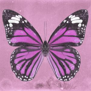 Miss Butterfly Genutia Sq - Pink by Philippe Hugonnard