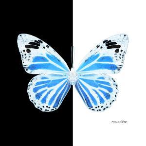 Miss Butterfly Genutia Sq - X-Ray B&W Edition by Philippe Hugonnard