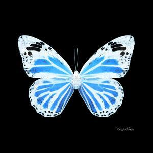Miss Butterfly Genutia Sq - X-Ray Black Edition by Philippe Hugonnard