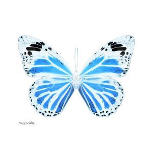 Miss Butterfly Genutia Sq - X-Ray White Edition by Philippe Hugonnard