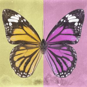 Miss Butterfly Genutia Sq - Yellow & Pink by Philippe Hugonnard