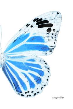 Miss Butterfly Genutia - X-Ray Right White Edition by Philippe Hugonnard