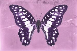 Miss Butterfly Graphium - Pink by Philippe Hugonnard