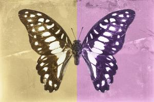 Miss Butterfly Graphium Profil - Honey & Pink by Philippe Hugonnard