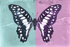 Miss Butterfly Graphium Profil - Turquoise & Pink by Philippe Hugonnard