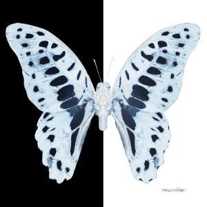 Miss Butterfly Graphium Sq - X-Ray B&W Edition by Philippe Hugonnard