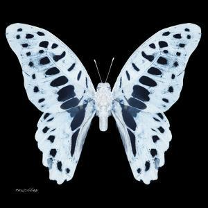 Miss Butterfly Graphium Sq - X-Ray Black Edition by Philippe Hugonnard
