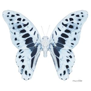 Miss Butterfly Graphium Sq - X-Ray White Edition by Philippe Hugonnard