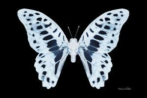 Miss Butterfly Graphium - X-Ray Black Edition by Philippe Hugonnard