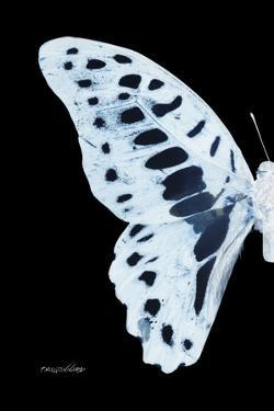 Miss Butterfly Graphium - X-Ray Left Black Edition by Philippe Hugonnard
