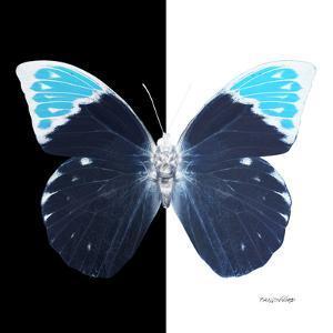 Miss Butterfly Hebomoia Sq - X-Ray B&W Edition by Philippe Hugonnard
