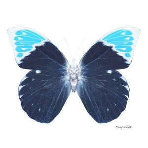 Miss Butterfly Hebomoia Sq - X-Ray White Edition by Philippe Hugonnard