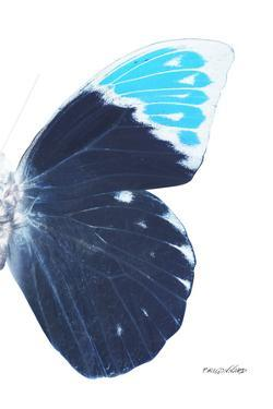 Miss Butterfly Hebomoia - X-Ray Right White Edition by Philippe Hugonnard