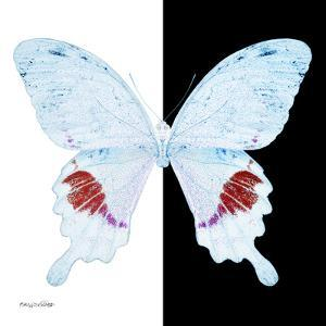 Miss Butterfly Hermosanus Sq - X-Ray B&W Edition by Philippe Hugonnard