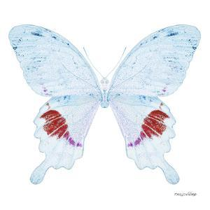 Miss Butterfly Hermosanus Sq - X-Ray White Edition by Philippe Hugonnard
