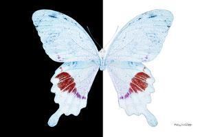 Miss Butterfly Hermosanus - X-Ray B&W Edition by Philippe Hugonnard