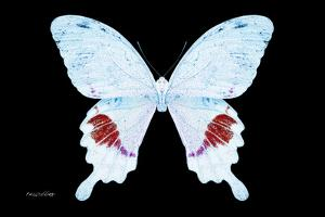 Miss Butterfly Hermosanus - X-Ray Black Edition by Philippe Hugonnard