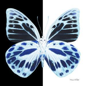 Miss Butterfly Prioneris Sq - X-Ray B&W Edition by Philippe Hugonnard