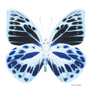 Miss Butterfly Prioneris Sq - X-Ray White Edition by Philippe Hugonnard