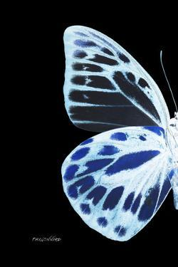 Miss Butterfly Prioneris - X-Ray Left Black Edition by Philippe Hugonnard