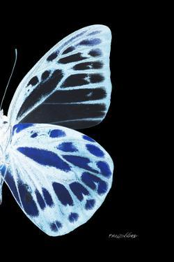 Miss Butterfly Prioneris - X-Ray Right Black Edition by Philippe Hugonnard