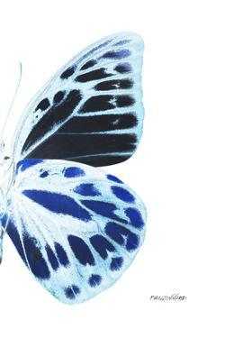 Miss Butterfly Prioneris - X-Ray Right White Edition by Philippe Hugonnard