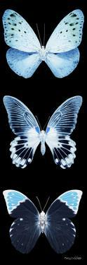 Miss Butterfly X-Ray Black Pano by Philippe Hugonnard