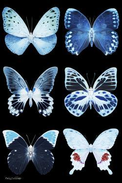 Miss Butterfly X-Ray Black by Philippe Hugonnard