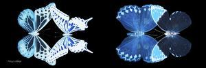 Miss Butterfly X-Ray Duo Black Pano III by Philippe Hugonnard