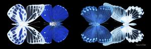 Miss Butterfly X-Ray Duo Black Pano IV by Philippe Hugonnard