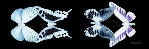 Miss Butterfly X-Ray Duo Black Pano IX by Philippe Hugonnard