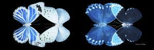 Miss Butterfly X-Ray Duo Black Pano X by Philippe Hugonnard