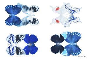 Miss Butterfly X-Ray Duo White III by Philippe Hugonnard